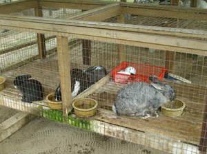 Кормление кроликов в домашних условиях для начинающих 958