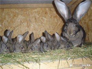 Каким кормом можно кормить кроликов в домашних условиях