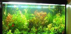 Как вырастить водоросли для аквариума в домашних условиях 82