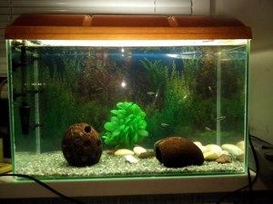 Что такое донный фильтр для аквариума своими руками