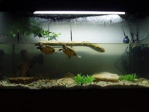 Обустраиваем аквариум для красноухой черепахи своими руками 176