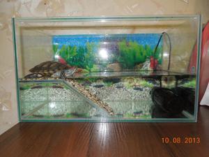 Обустраиваем аквариум для красноухой черепахи своими руками 180
