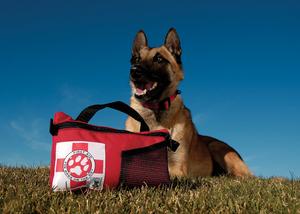 Обезболивающие средства для суставов у собак разрыв связок лучезапястного сустава симптомы