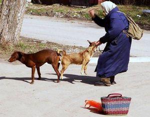 Спаривание Собак С Женщинами
