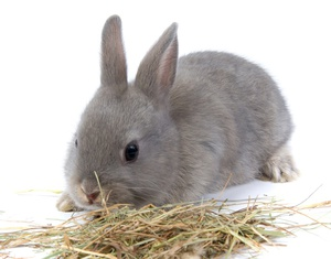 Кролики как за ними ухаживать в домашних условиях 64