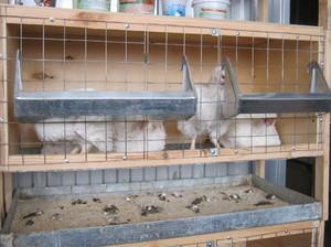 Клетки для цыплят своими руками видео фото 523