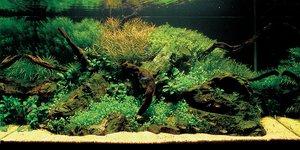 Как правильно оформить аквариум