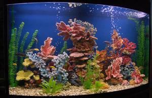 Как сделать интерьер аквариума