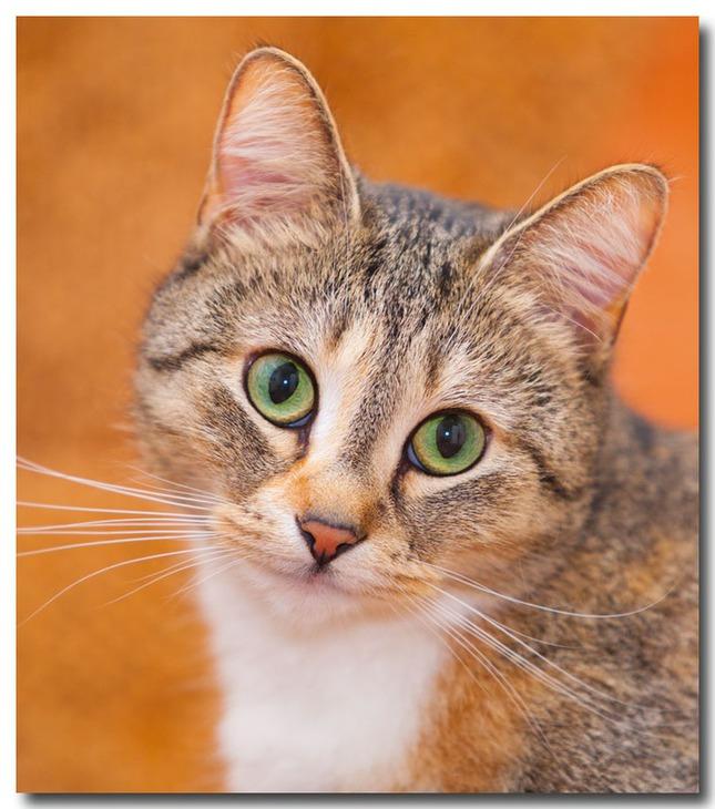 Портретные фото котов и кошек