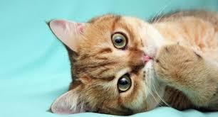 Что делать, если кошка не может сходить в туалет по-маленькому