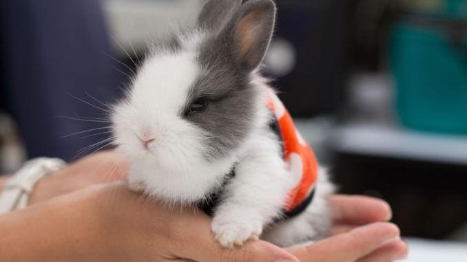Что делать, если у кролика пошла кровь из носа
