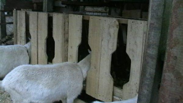 Инструкция по созданию кормушки для коз своими руками