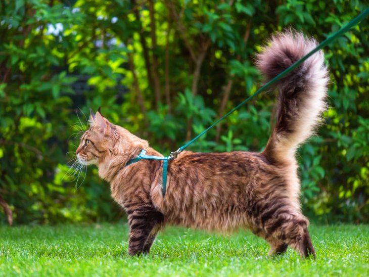 Интересно все же зачем котам хвосты?