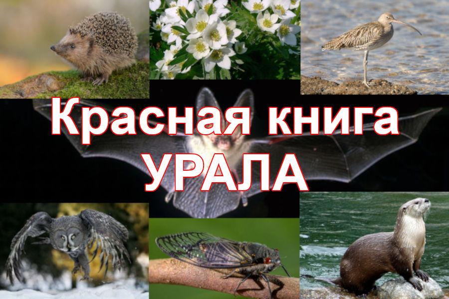 Животные в Красной книге Урала
