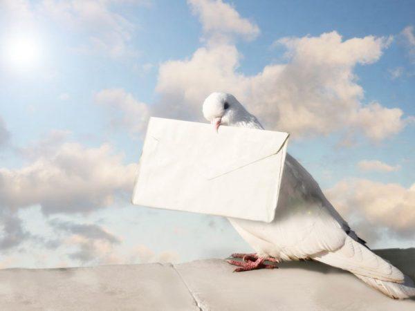 Как голуби стали приносить почту