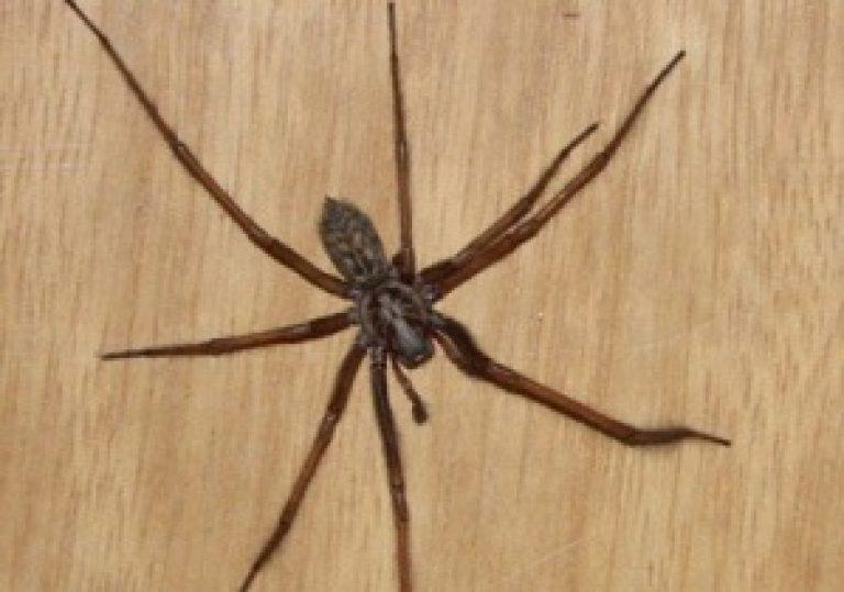 Как избавиться от пауков в доме: популярные способы