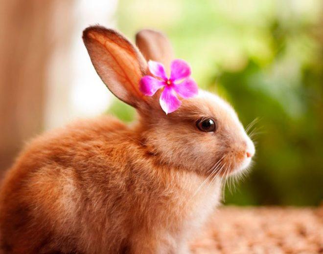 Как красиво назвать кролика-девочку