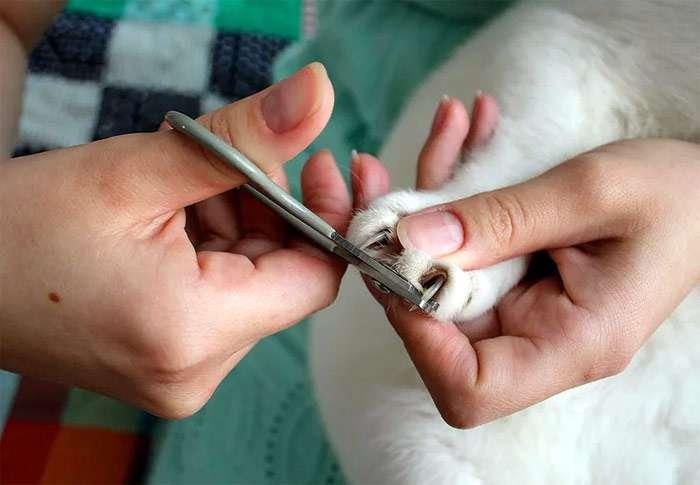 Как нужно правильно подстричь когти коту