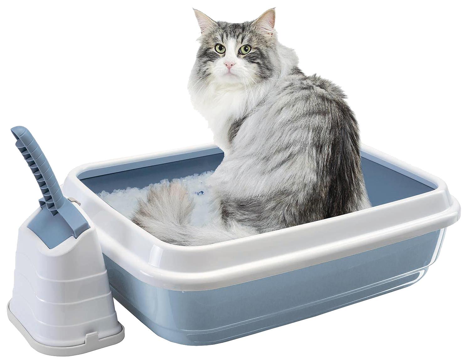 Как отучить котёнка или кошку гадить в неположенном месте