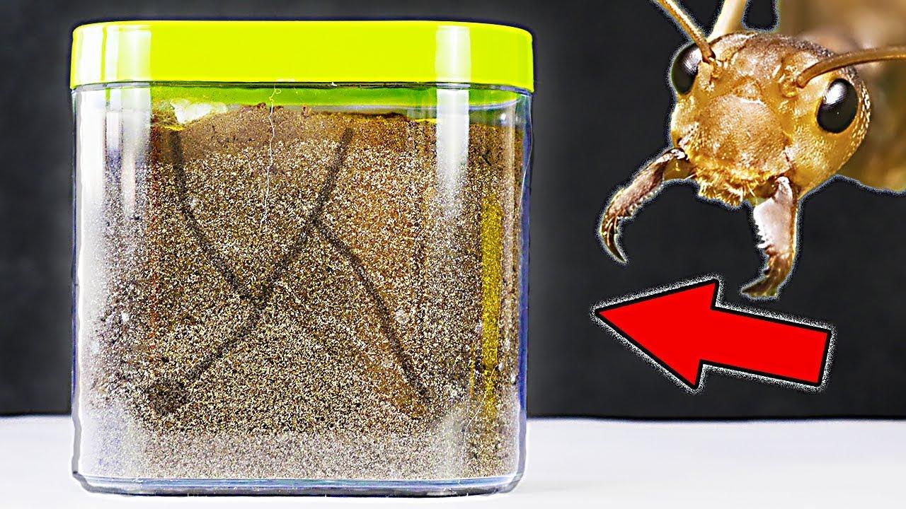 Как сделать муравьиную ферму своими руками