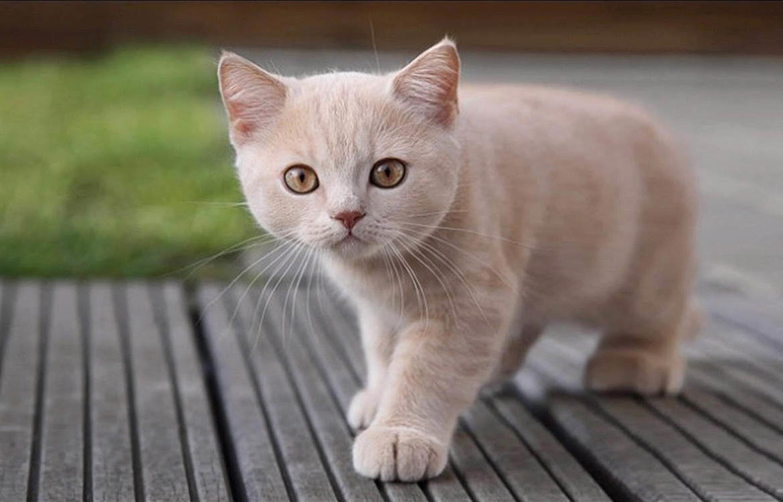 Какие существуют имена для кошек девочек