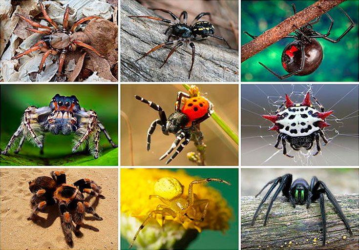 Какие в природе бывают виды пауков