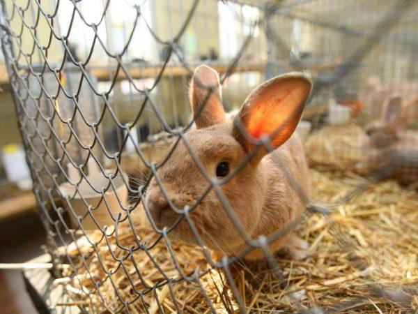 Каких типов и размеров бывают кроличьи клетки?