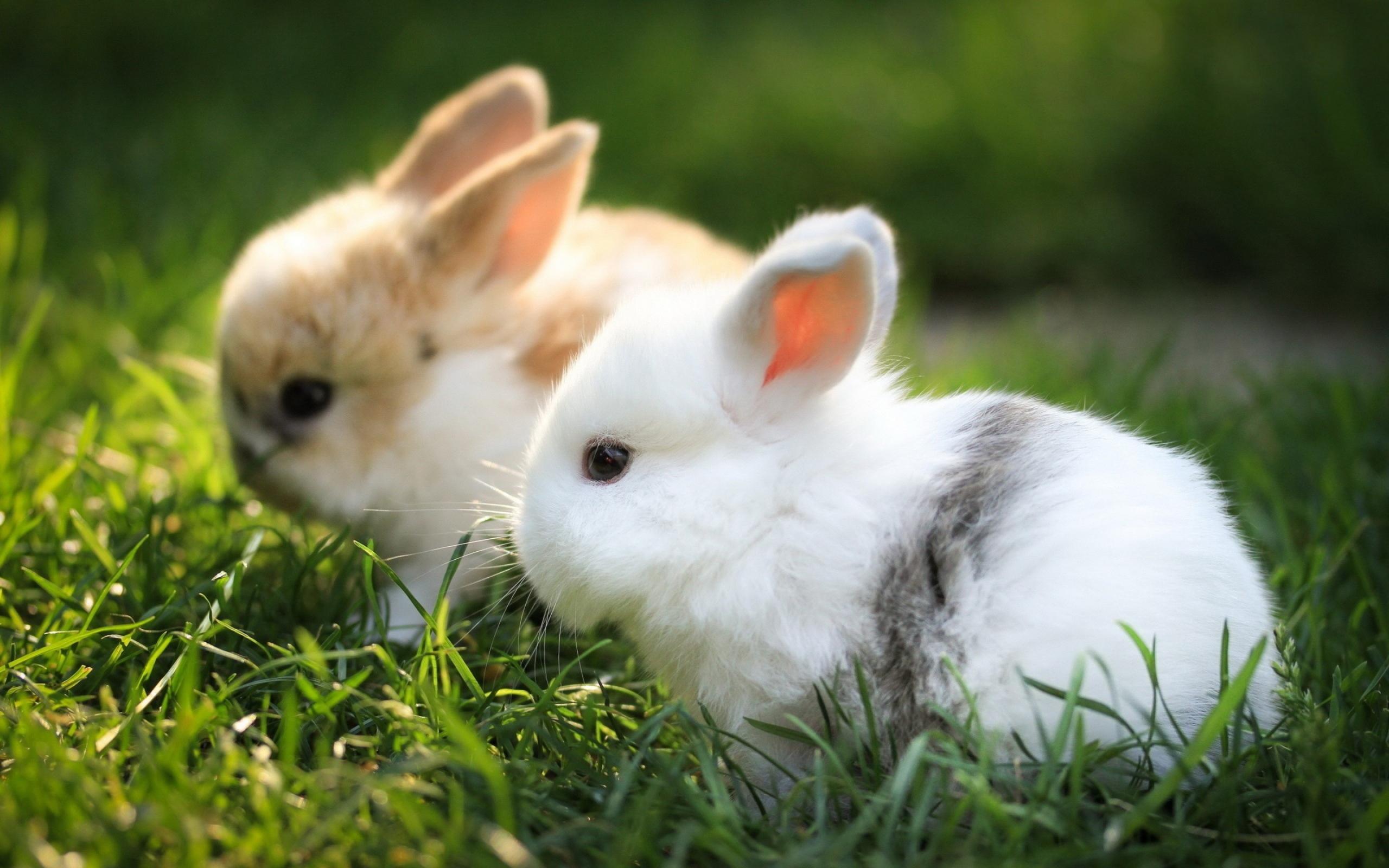 Какой травой можно кормить кроликов?