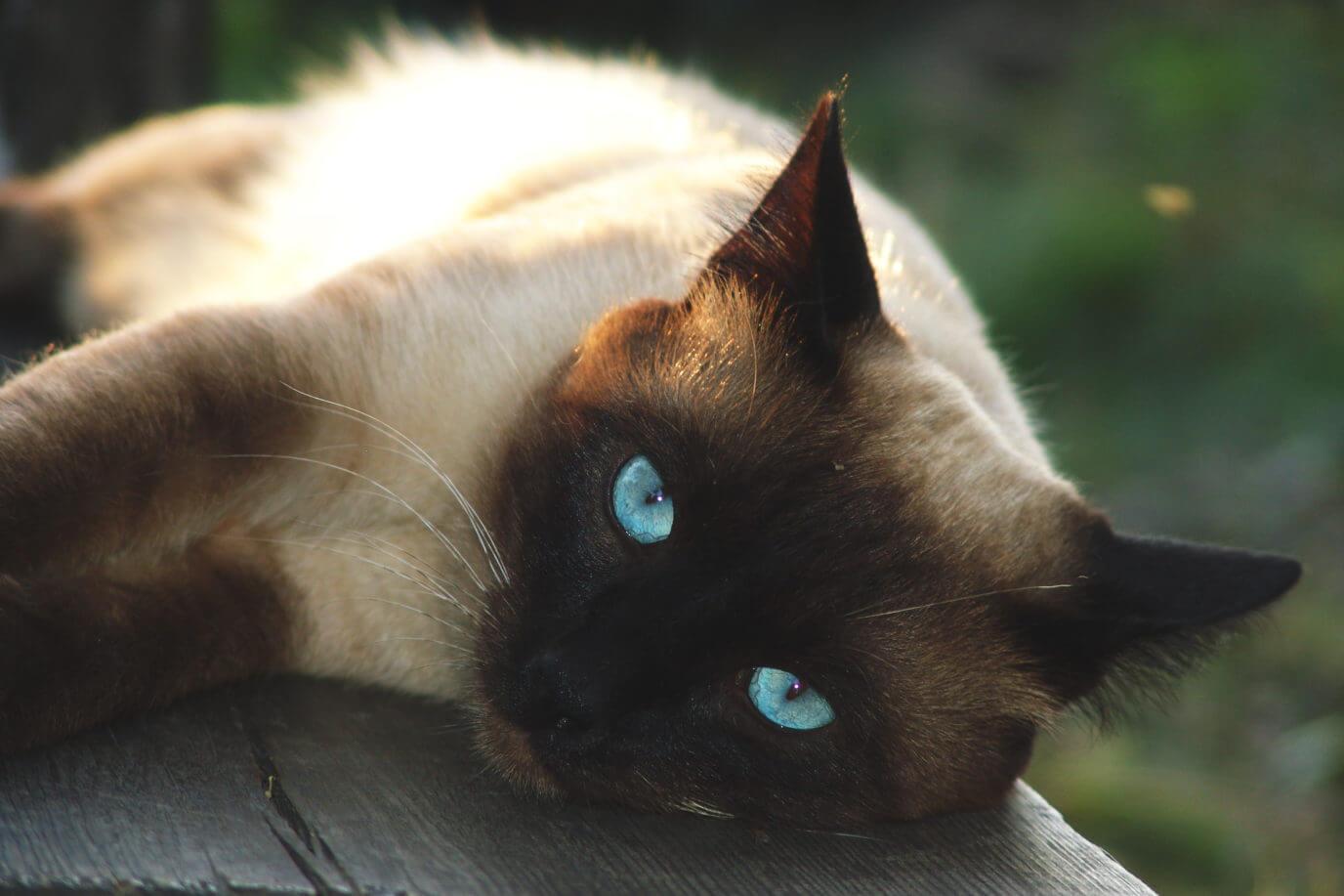 Клички для кошки: красивые, необычные, из мультиков и другие