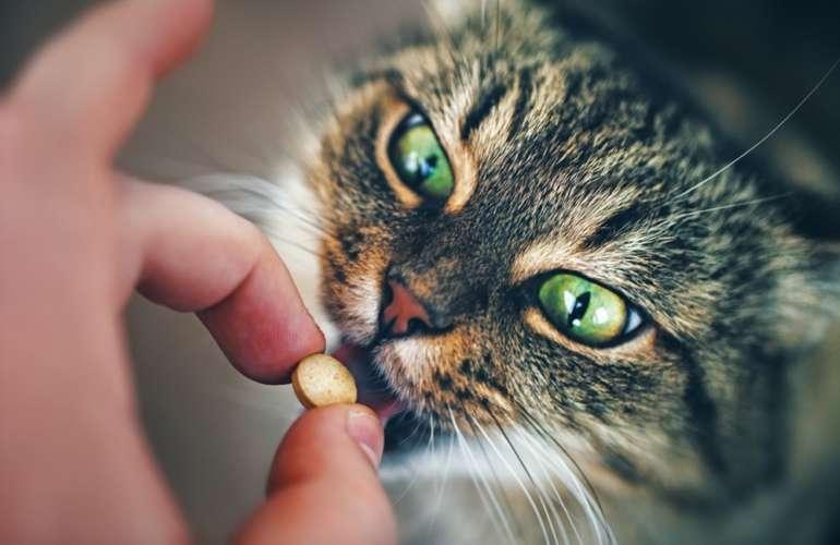 Комплексы витаминов для котов и беременных кошек