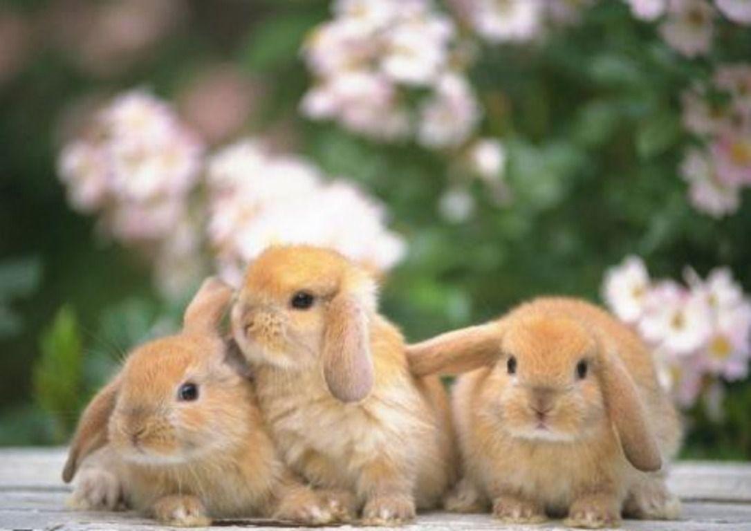 Кормление кроликов и крольчат в домашних условиях