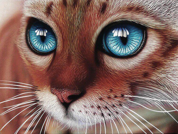 Красивая мордочка кошки
