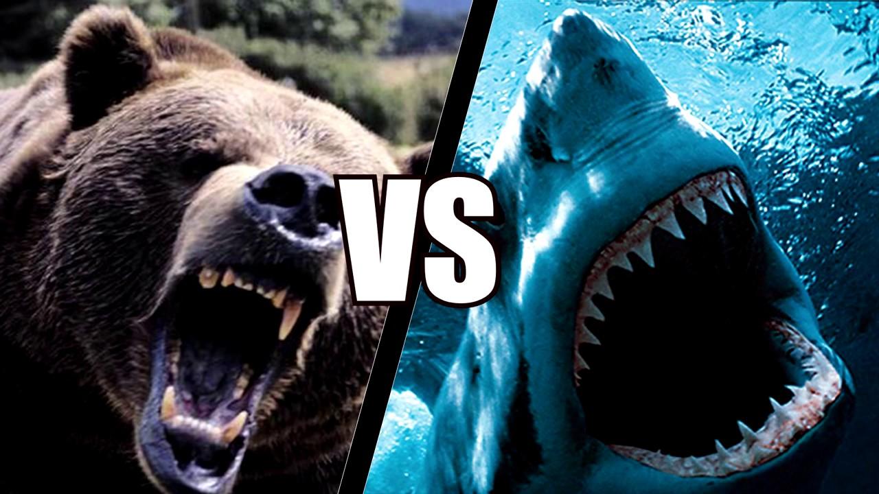 Кто сильнее и быстрее медведь или акула