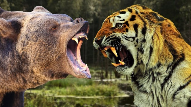 Кто сильнее, медведь или тигр? Лев или медведь?