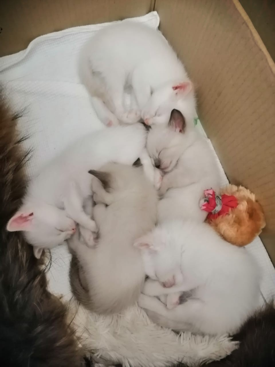 Куда деть новорожденных котят?