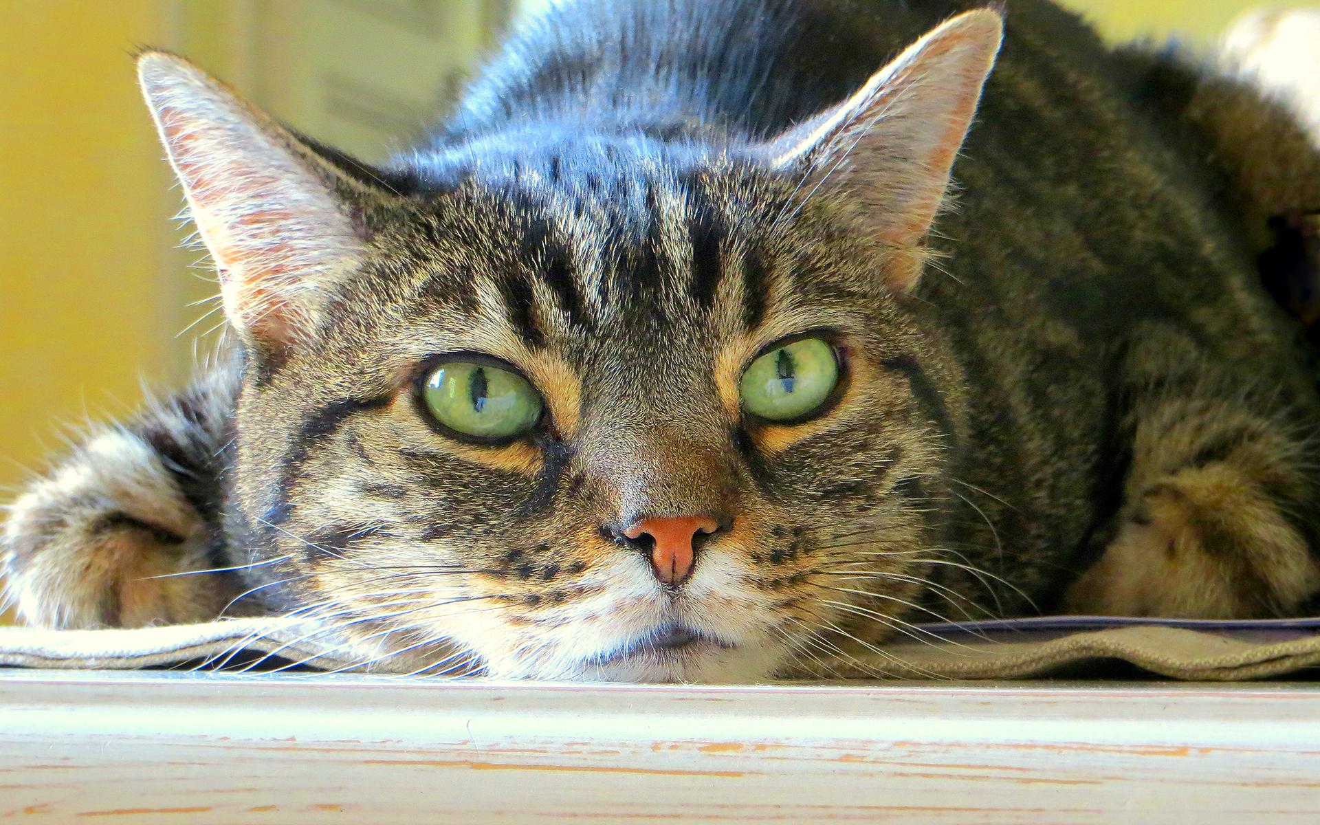 Лечение и признаки мочекаменной болезни у котов