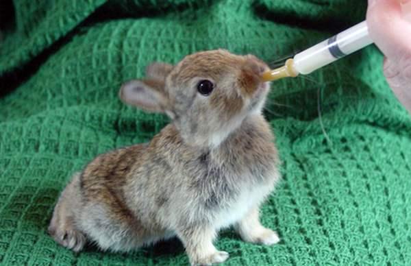Маленький крольчонок — чем кормить?