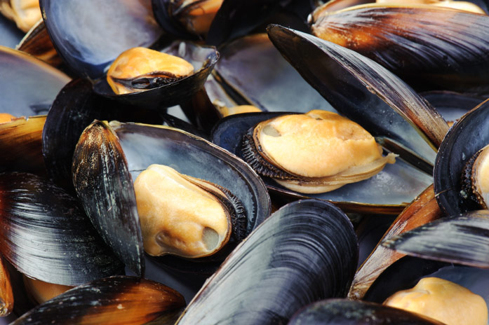 Мидии — польза и вред популярного морепродукта