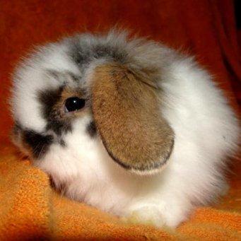 Можно ли давать домашним кроликам сладости