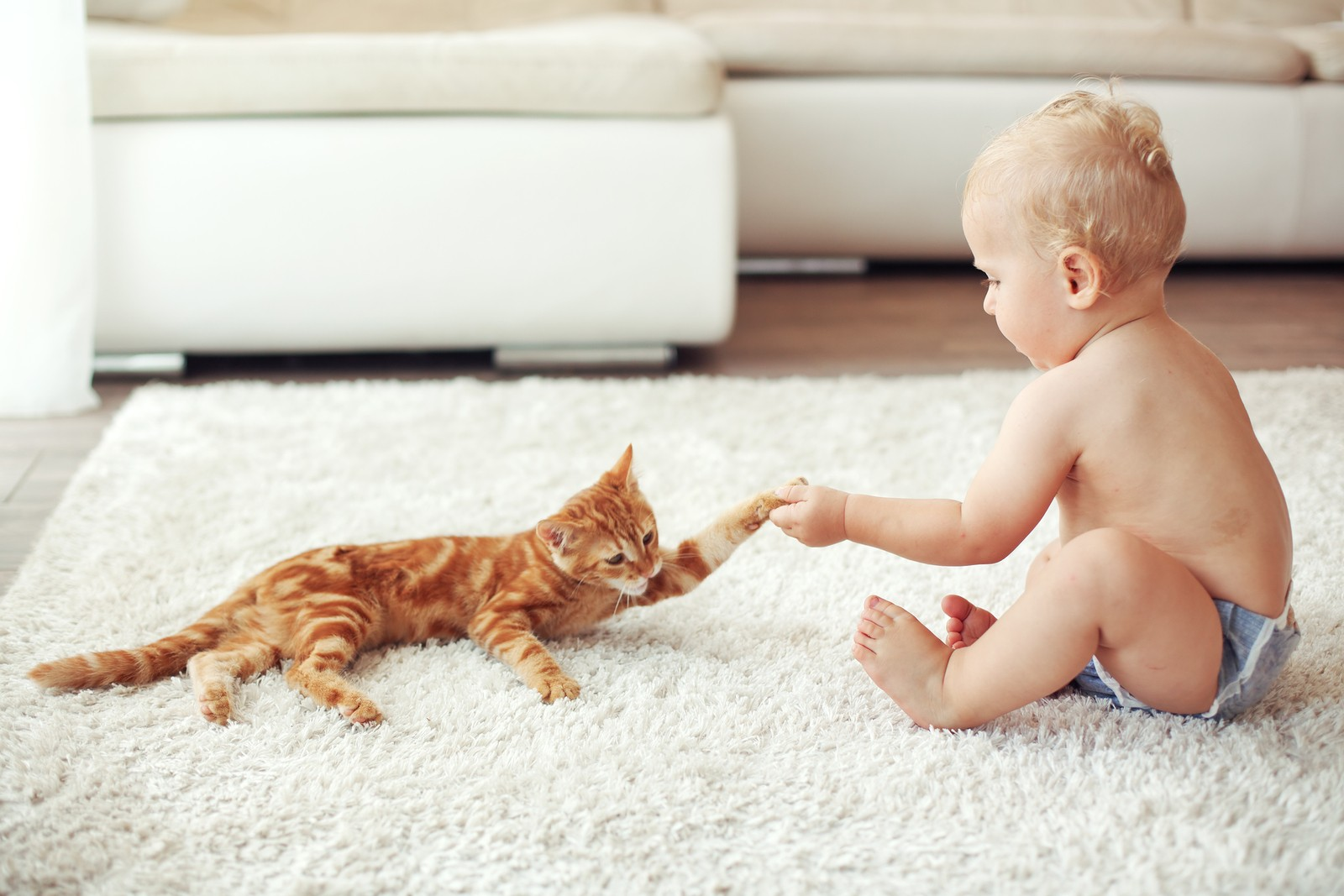 Не опасна ли дружба кошки с младенцем