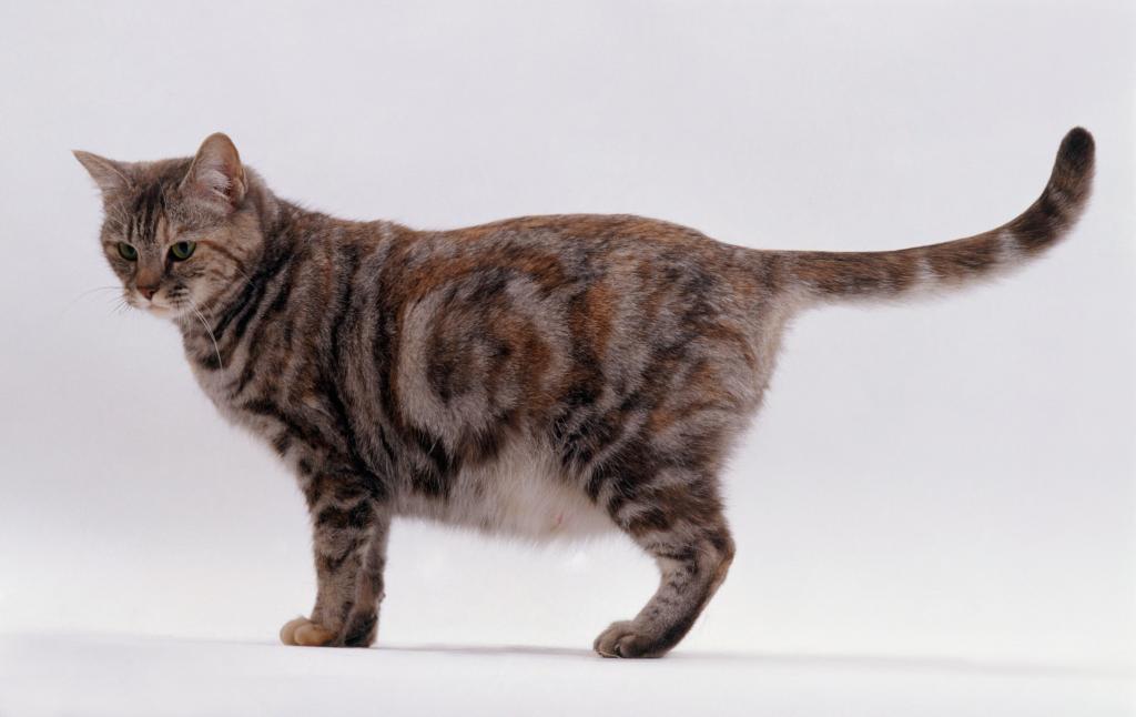 Основные признаки родов у домашней кошки