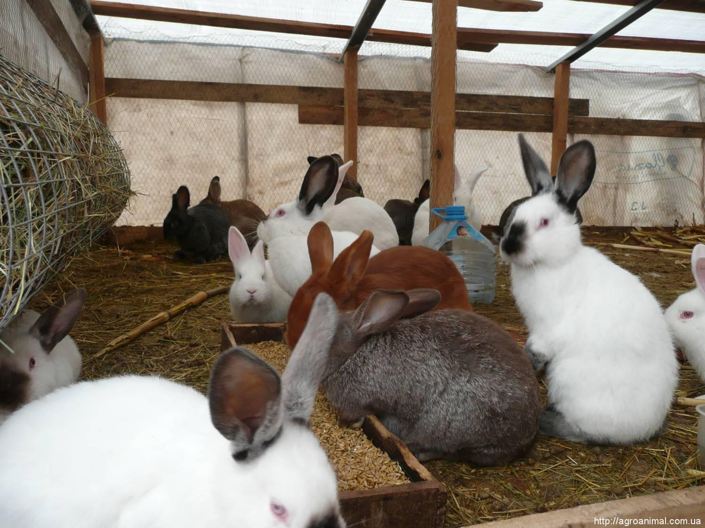 Особенности содержания кроликов в вольерах