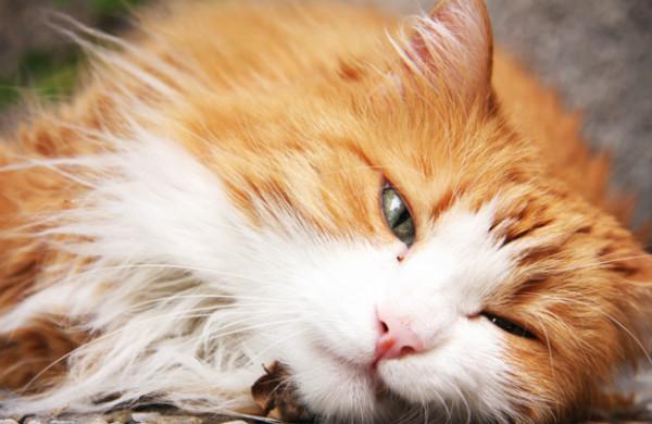 Особенности течения энтерита у кошек