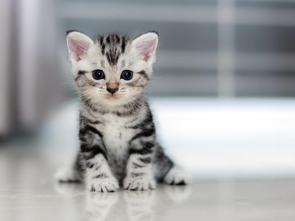 Особенности выбора кличек для мальчиков котов