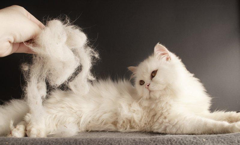 Почему кошка сильно линяет и что с этим делать