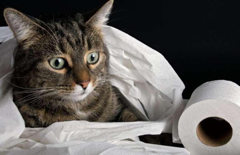 Почему у кошки понос: причины и лечение