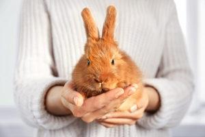 Приручение кроликов2