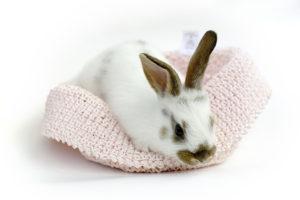 Приручение кроликов3