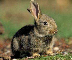 Приручение кроликов4
