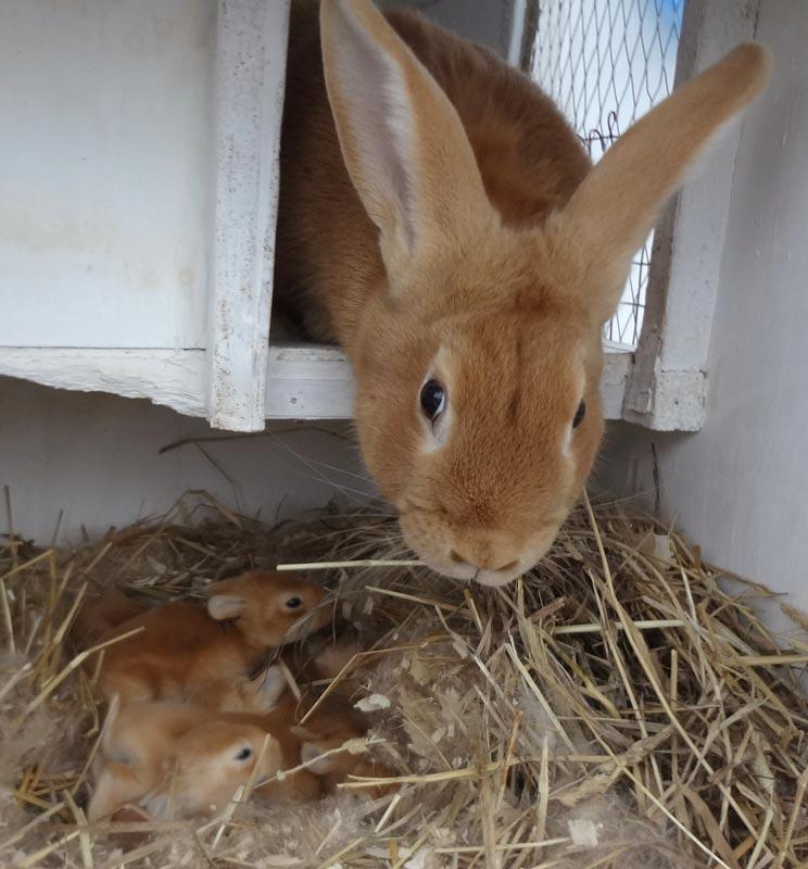 Рецепты питания кроликов в зимний и летний период